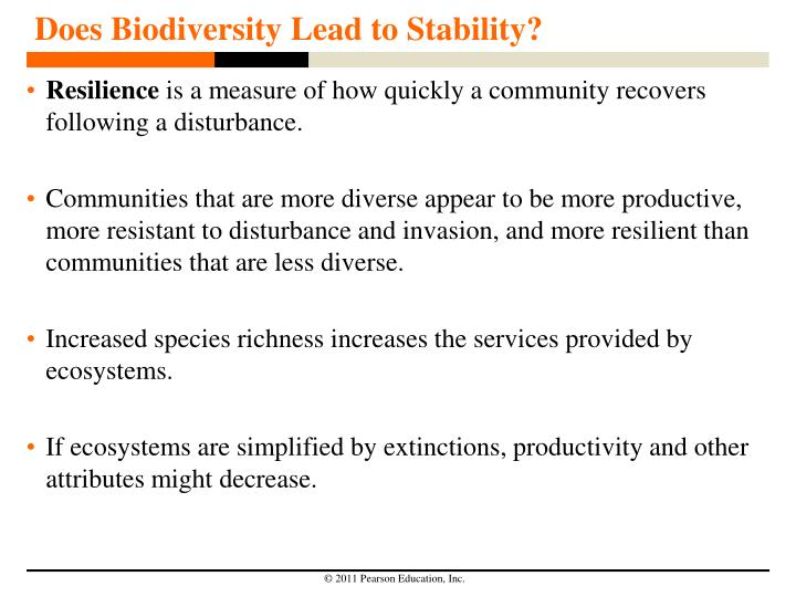 Does Biodiversity Lead to Stability?