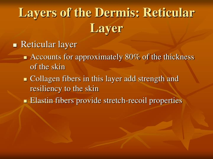 Layers of the Dermis: Reticular Layer