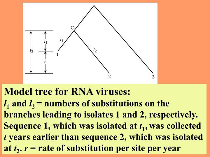 Model tree for RNA viruses: