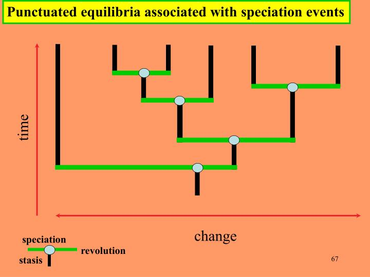 Punctuated equilibria associated with speciation events