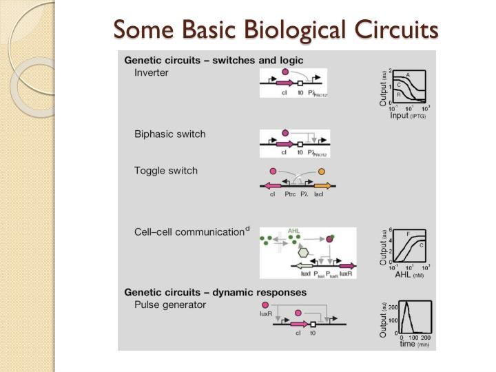 Some Basic Biological Circuits