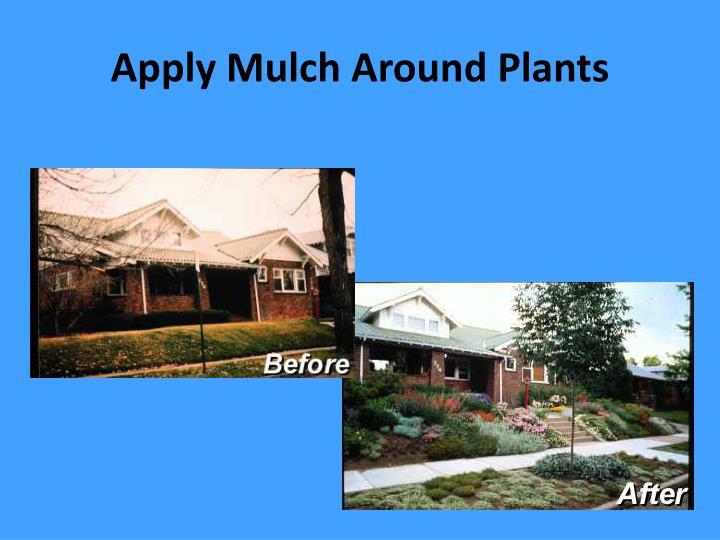 Apply Mulch Around Plants