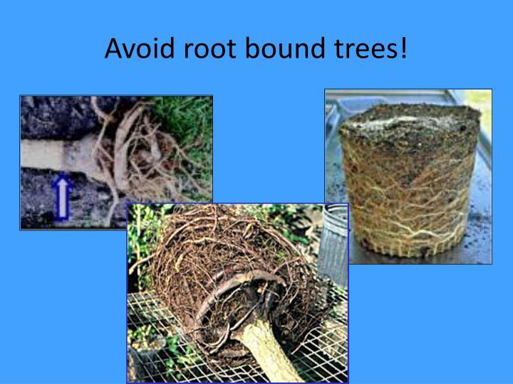 Avoid root bound trees!