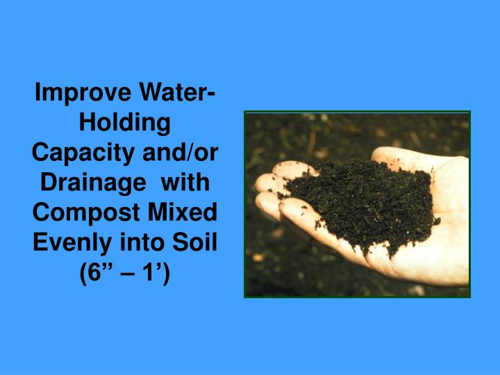 Improve Water-Holding Capacity and/or Drainage  with Compost Mixed Evenly into Soil