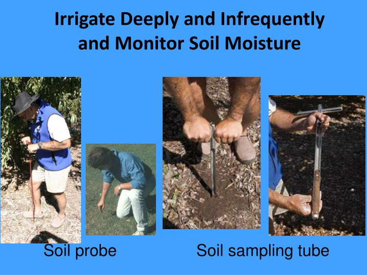 Irrigate Deeply and Infrequently and Monitor Soil Moisture