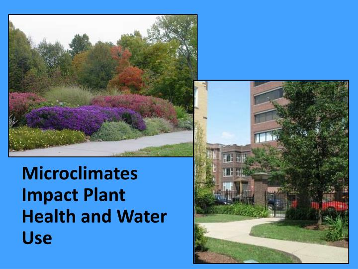 Microclimates Impact Plant Health and Water Use