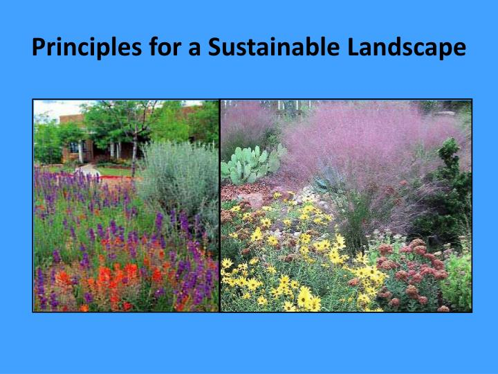 principles for a sustainable landscape n.