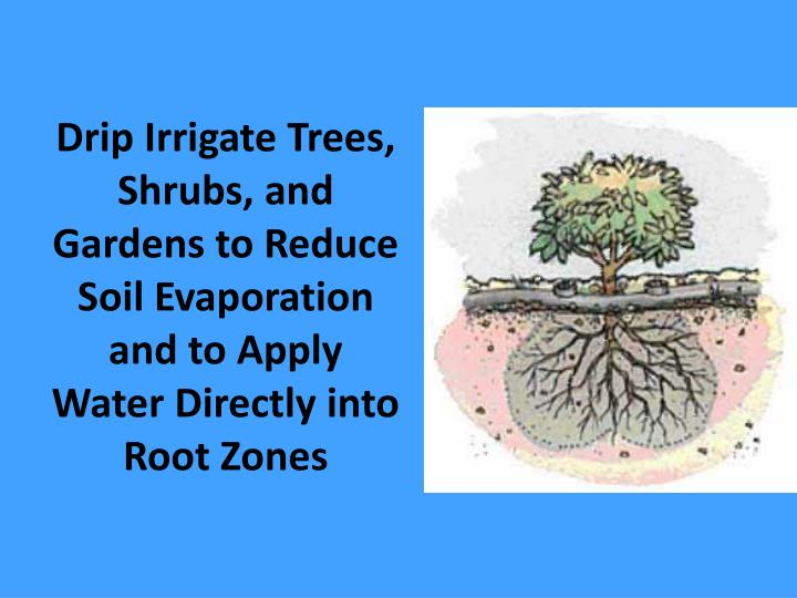 Drip Irrigate Trees, Shrubs, and Gardens to Reduce Soil Evaporation and to Apply Water Directly into Root Zones