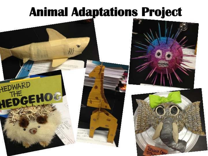 Animal adaptations project1