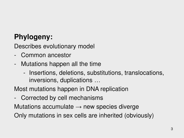 Phylogeny: