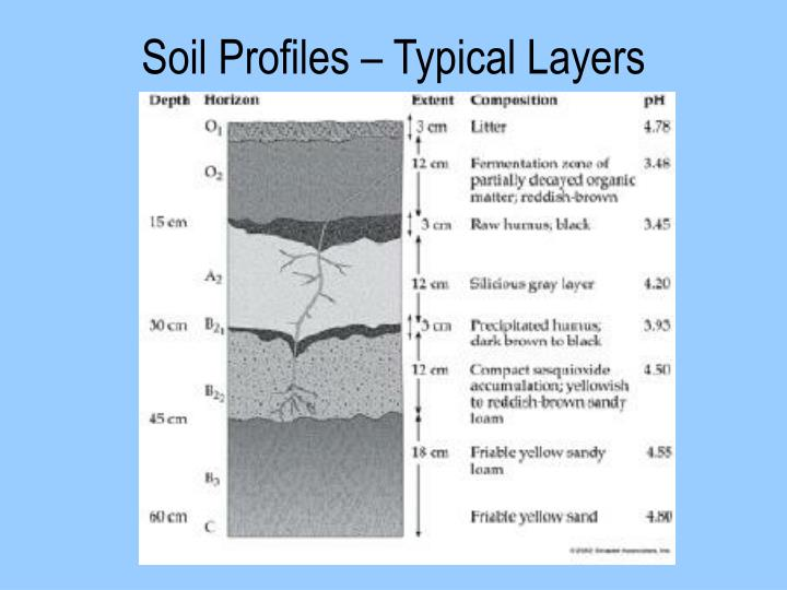 Soil Profiles – Typical Layers