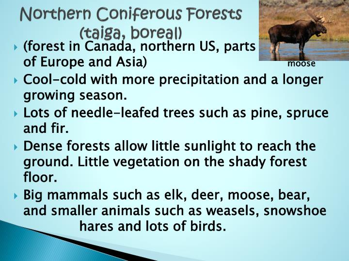 Northern Coniferous Forests
