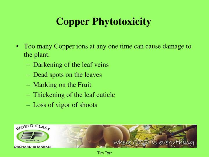 Copper Phytotoxicity