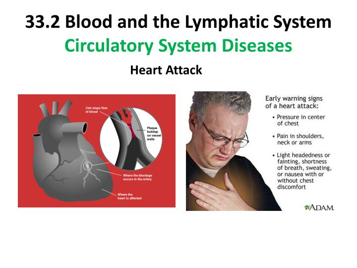33.2 Blood and the Lymphatic System