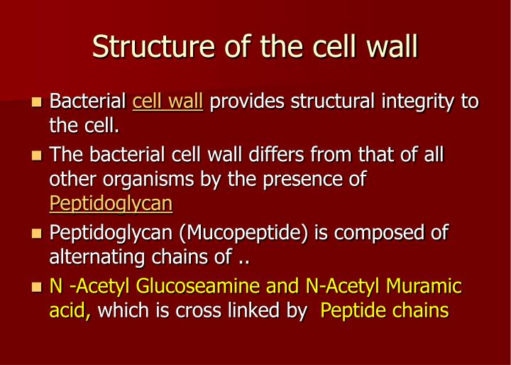 Structure of the cell wall