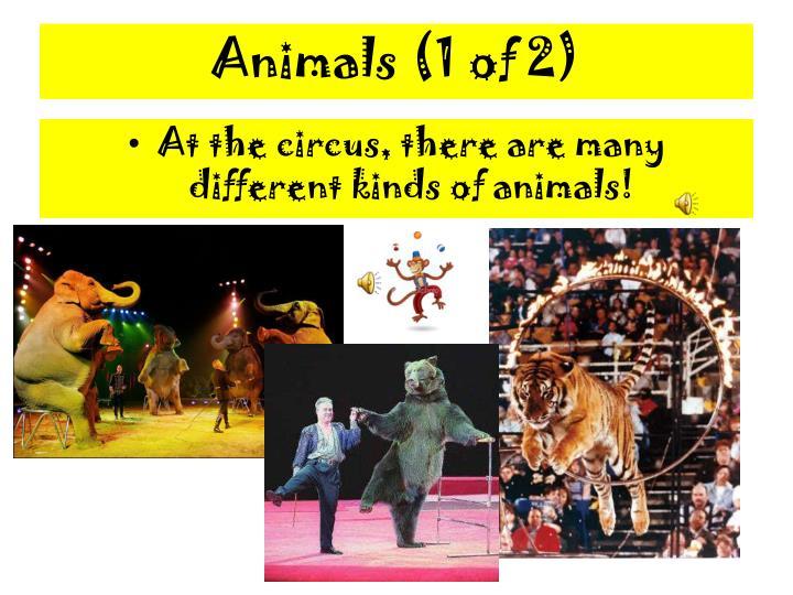 Animals (1 of 2)