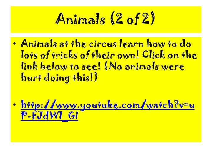 Animals (2 of 2)