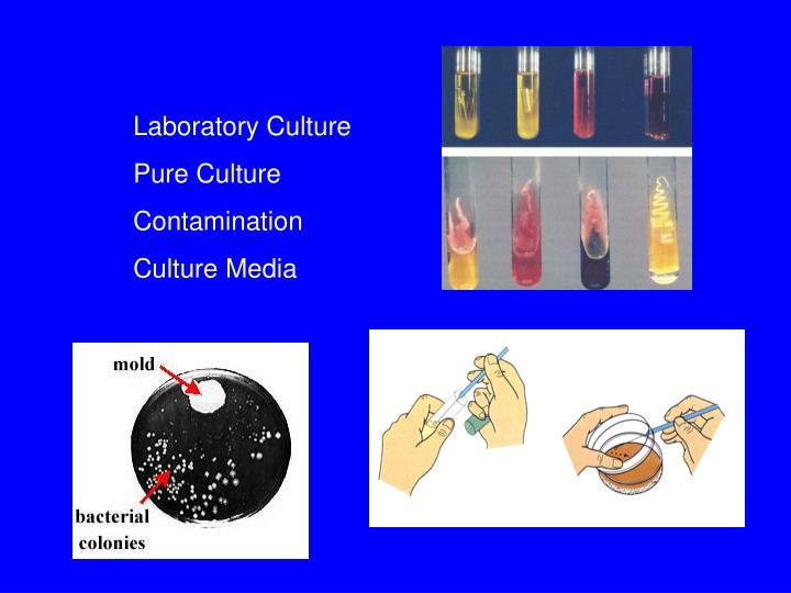 Laboratory Culture