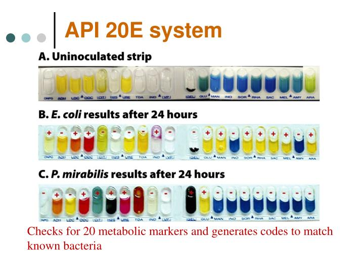 API 20E system