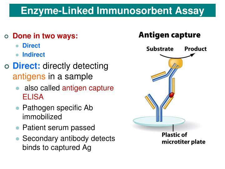 Enzyme-Linked Immunosorbent Assay