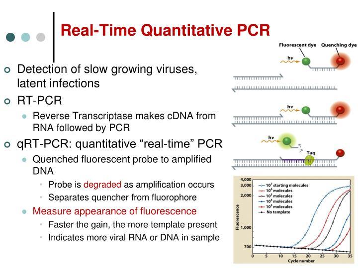 Real-Time Quantitative PCR