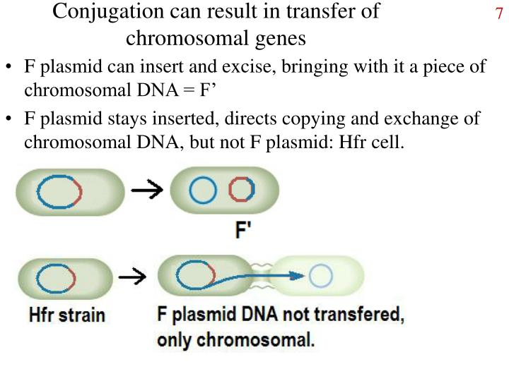 Conjugation can result in transfer of chromosomal genes
