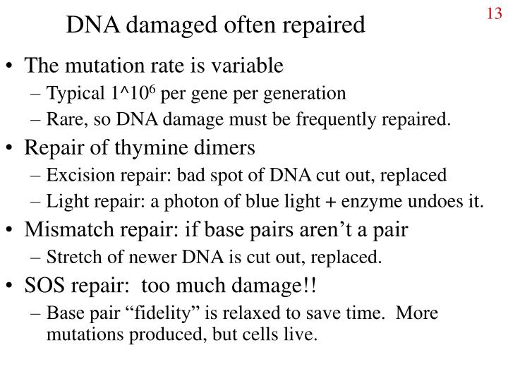 DNA damaged often repaired