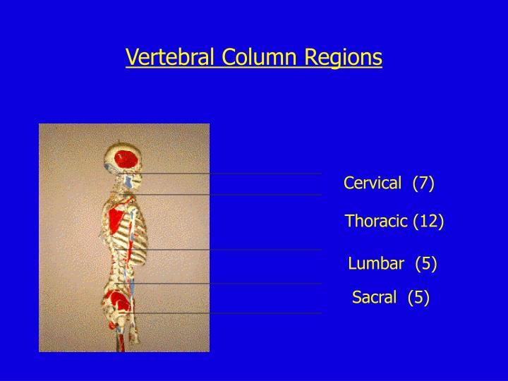Vertebral Column Regions