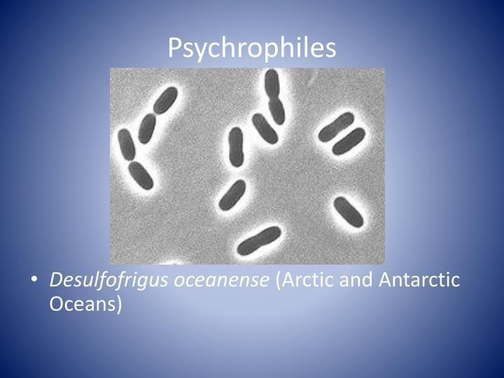 Psychrophiles