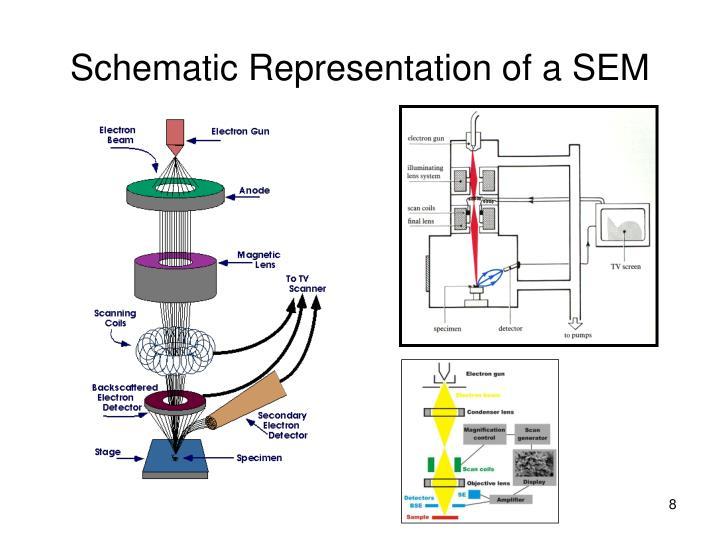 Schematic Representation of a SEM