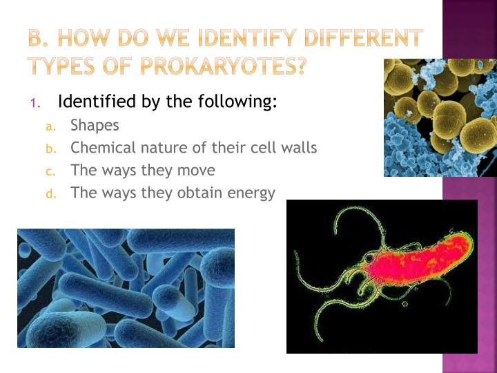 B how do we identify different types of prokaryotes