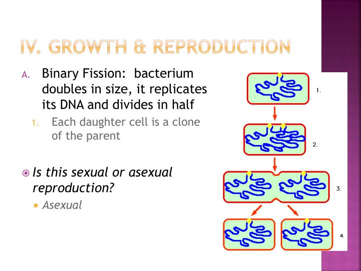 IV. Growth & Reproduction