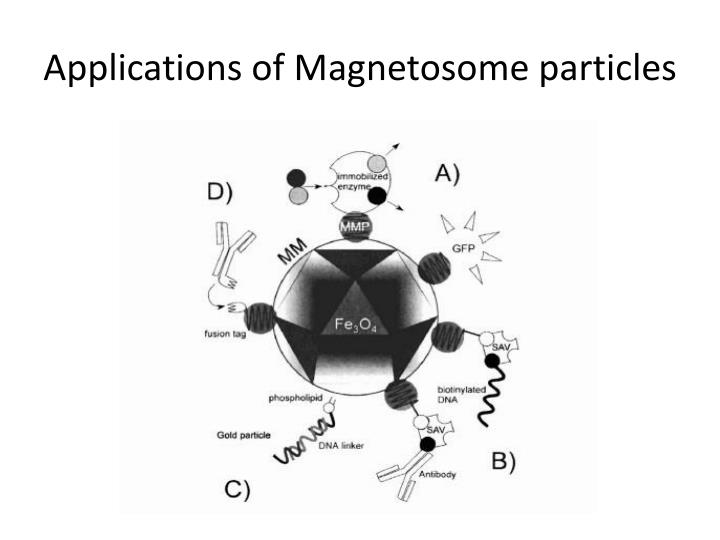 Applications of Magnetosome particles