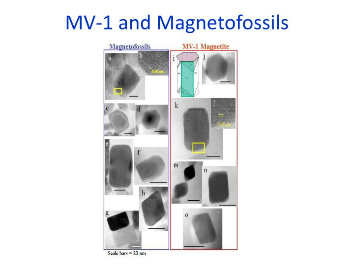 MV-1 and Magnetofossils