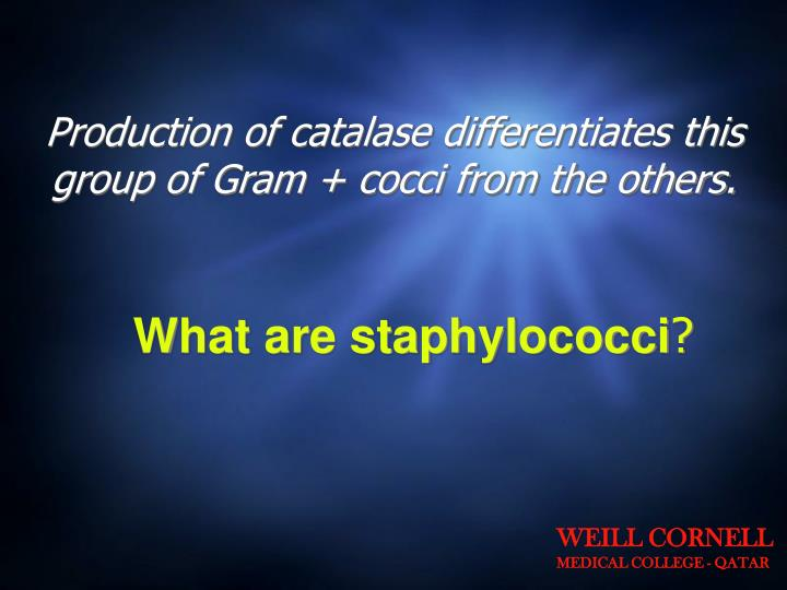 Production of catalase differentiates this group of Gram + cocci from the others.