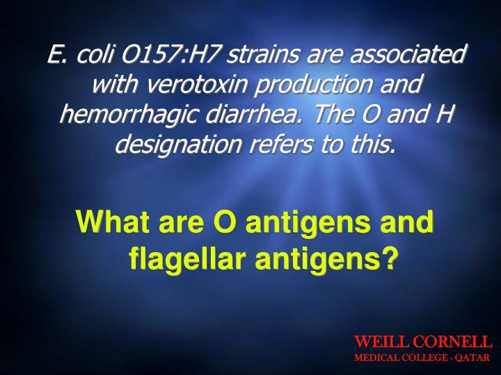 E. coli O157:H7 strains are associated with verotoxin production and hemorrhagic diarrhea. The O and H designation refers to this.