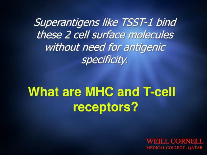 Superantigens like TSST-1 bind these 2 cell surface molecules without need for antigenic specificity.