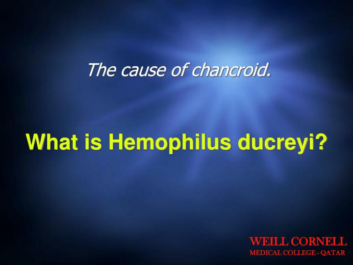 The cause of chancroid.