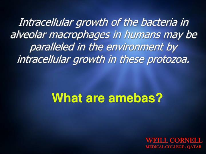 Intracellular growth of the bacteria in alveolar macrophages in humans may be paralleled in the environment by intracellular growth in these protozoa.
