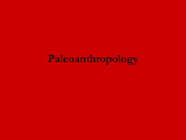 paleoanthropology n.