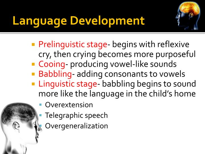 Ppt  Language And Thought Powerpoint Presentation  Id