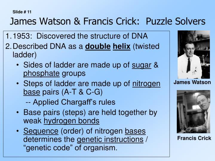 James Watson & Francis Crick:  Puzzle Solvers