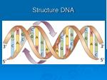 structure dna