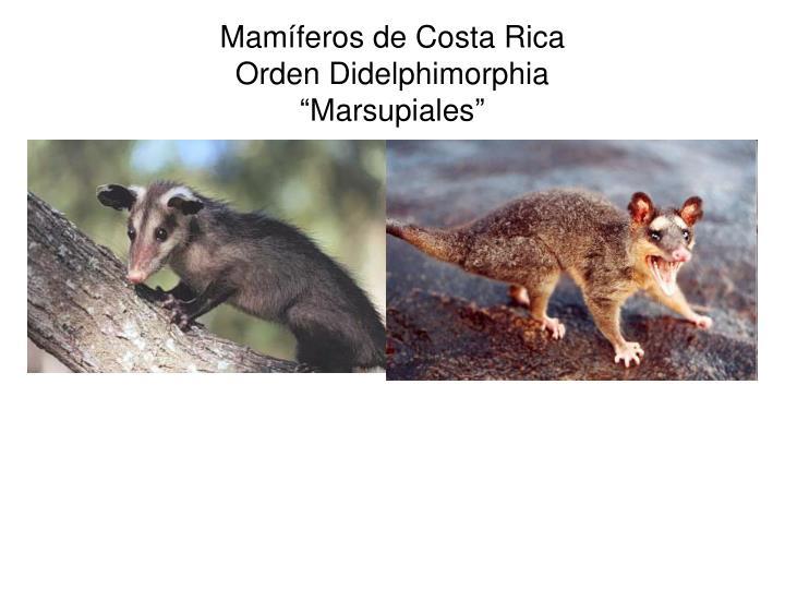 Mamíferos de Costa Rica