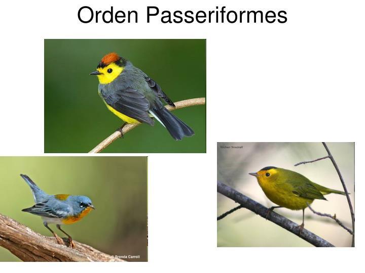 Orden Passeriformes