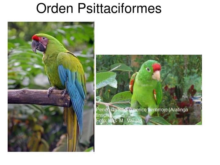 Orden Psittaciformes