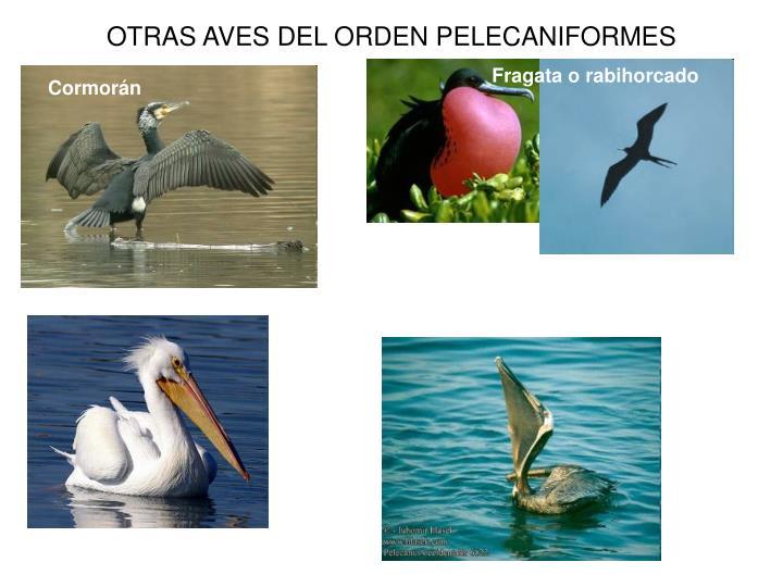 Otras aves del orden pelecaniformes