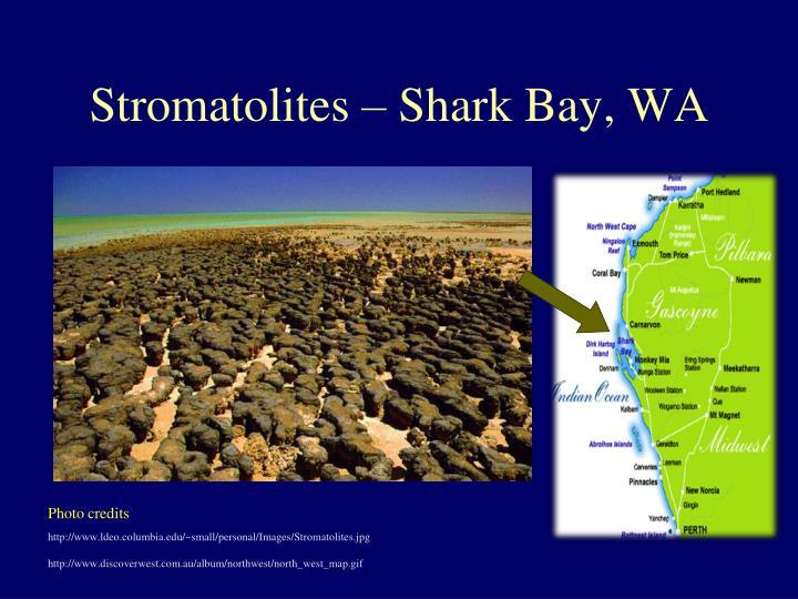 Stromatolites – Shark Bay, WA