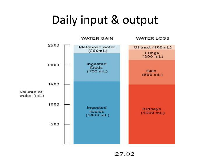 Daily input & output