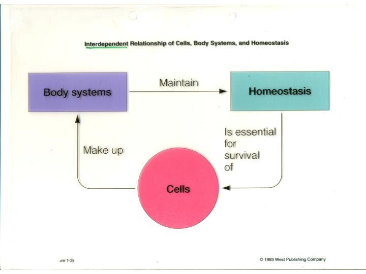 Body fluid regulation abnormalities
